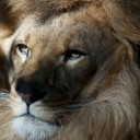 Profile picture of leobritoplay